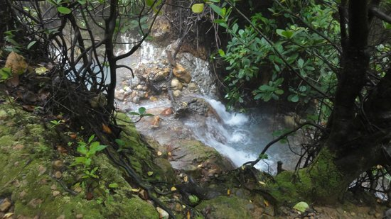 Jungle Bay, Dominica:                   excursion boiling lake