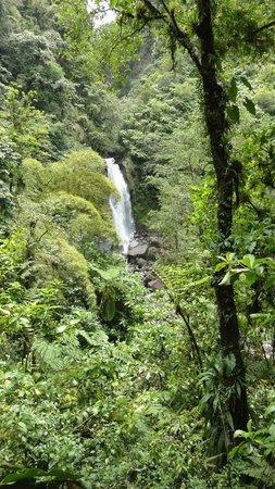 Jungle Bay, Dominica:                   excursion