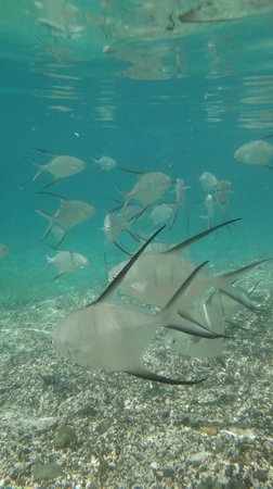 Flamenco Beach:                   These fishes were right there on the shore... not shy to come and greet you ..