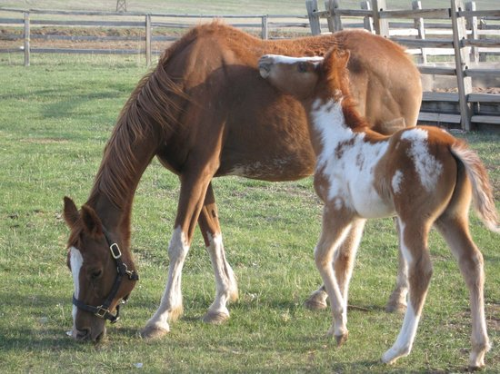 Zion Mountain Ranch:                   30 day old foal