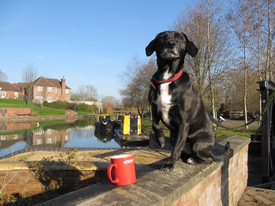 Rush enjoying an early morning cuppa outside the wharf house