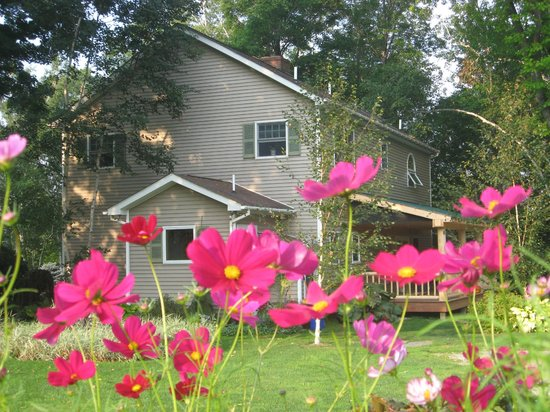 Steep Acres Farm Bed & Breakfast: The birches BB in full bloom