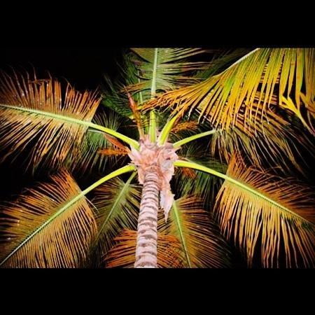 IFA Villas Bavaro Resort & Spa:                   palmera del hotel de noche