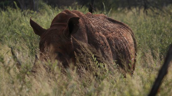 Jaci's Tree Lodge:                   Rhino seen on our game drive