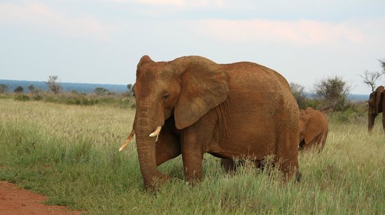Jaci's Tree Lodge:                   Elephant seen on our game drive