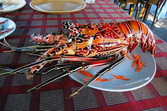 New Lighthouse Restaurant:                   The lobster shell
