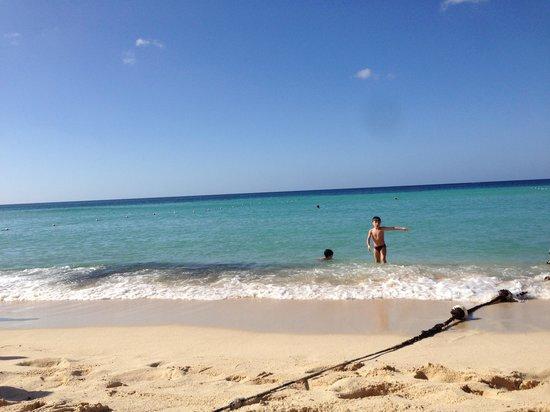 Viva Wyndham Dominicus Palace:                   Spiaggia                 