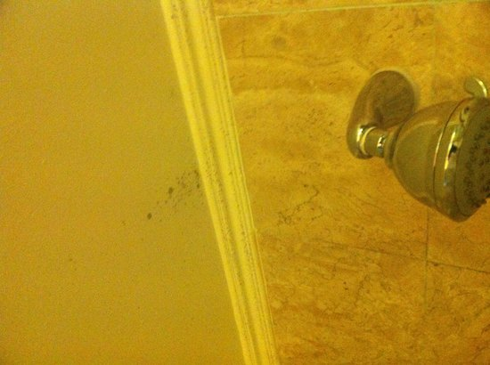 Le Meridien Kota Kinabalu:                   Mold on bathroom ceiling
