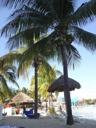 Grand Oasis Palm:                   Palmeras del hotel