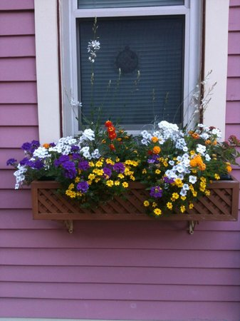 Rose & Thistle Bed & Breakfast: Window box flowers