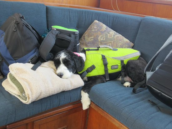 Ocean Adventure Center: Vancouver Fishing Charters:                   Our pup was tired from all the fishing fun!
