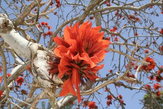 Michamvi, Τανζανία: tree in Kichanga