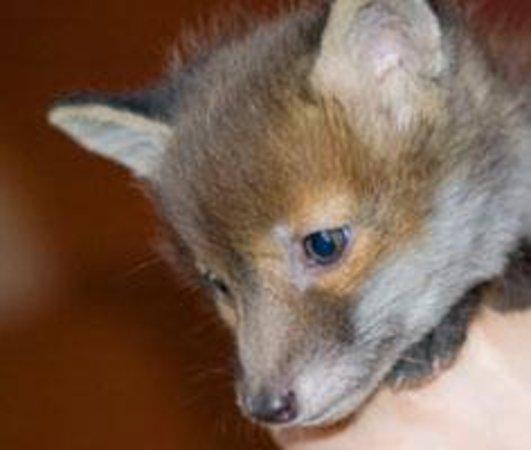 Wetheriggs Animal Rescue Centre