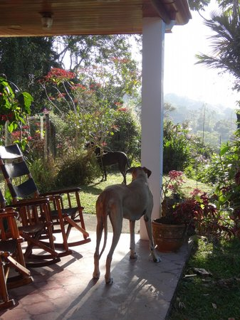 Chalet Nicholas:                   The beautiful great Danes