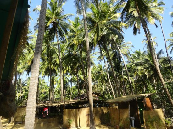 Coastal Jewel of Goa:                   Outside the Cottage