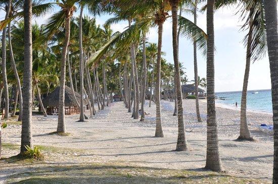 Club Med Punta Cana:                   Shady Palms