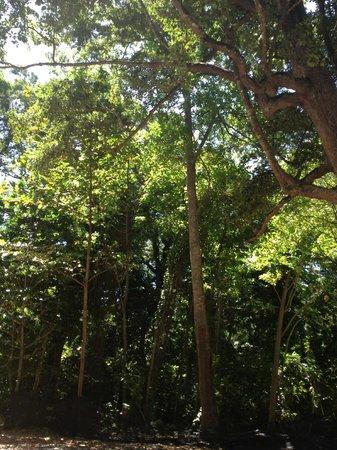 Similan Islands National Park:                   vegetazione