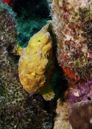 巴迪潛水渡假村照片