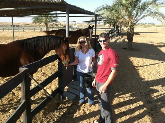 Al Maha, A Luxury Collection Desert Resort & Spa:                   Visiting the arabians one last time