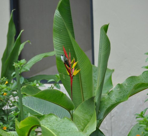 El MaPi by Inkaterra:                   hummingbird