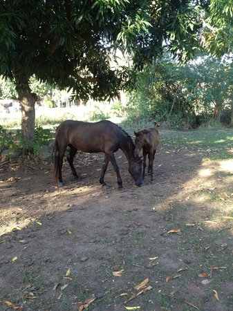 Estancia de Manzanares Guest Rooms:                   Back Yard Horses