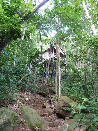 Jungle Bay, Dominica:                   voici la fameuse chambre n°33
