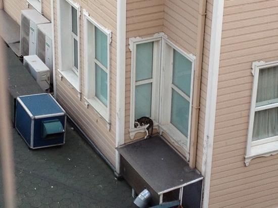 Armada Sultanahmet Otel:                   вид с террасы ресторана, кот прячется от ветра