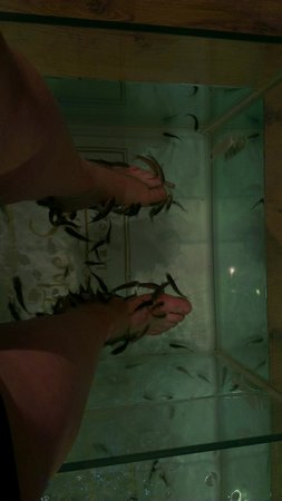 The Spa In Lancing:                   Fish Pedicure