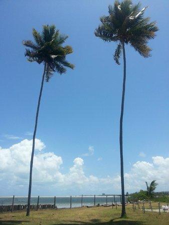 Ilha de Itamaracá, PE:                   Projeto Peixe Boi