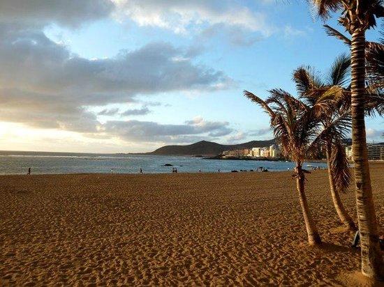 Playa de Las Canteras:                   alcune palme