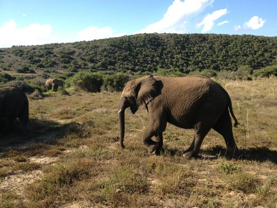 Shamwari Game Reserve Lodges:                   on our morning drive