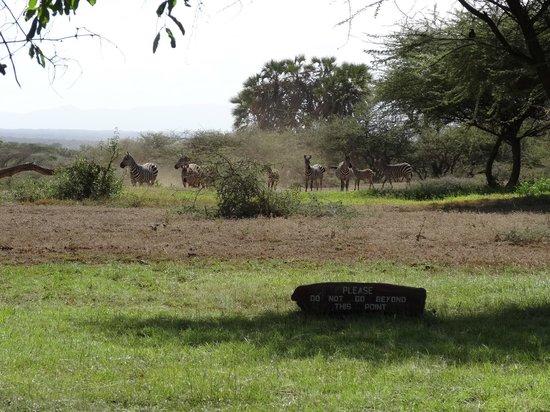 Severin Safari Camp:                   View from the lobby/bar/restaurant