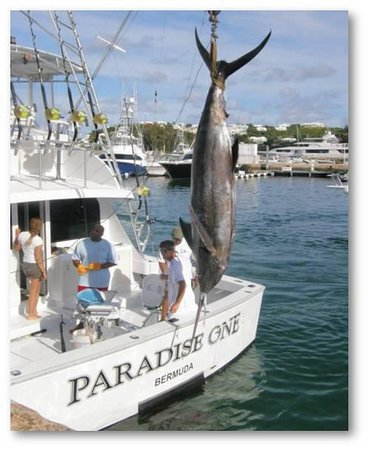 ‪Paradise One Sports Fishing Charters‬