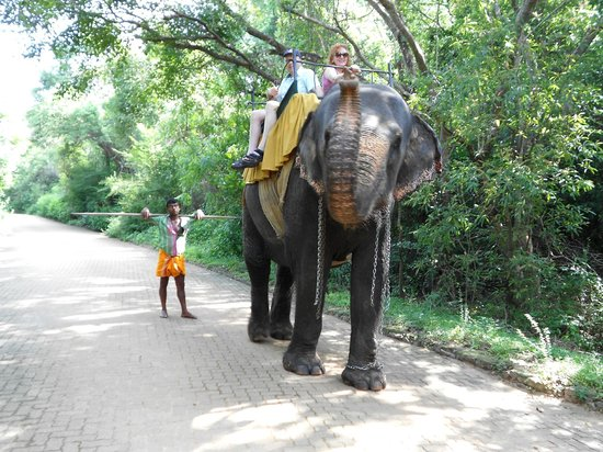 Heritance Kandalama:                                     the elephant around the corner