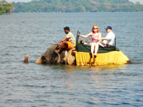 Heritance Kandalama:                                     elephant also takes a dip in the lake