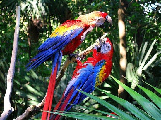 Xaman Ha Aviary:                   parrots