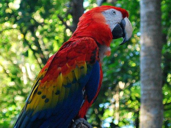 Xaman Ha Aviary:                   parrot