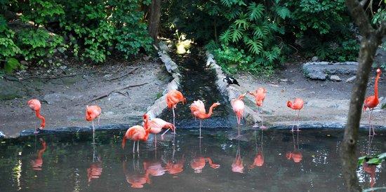 Xaman Ha Aviary:                   flamingo's                 