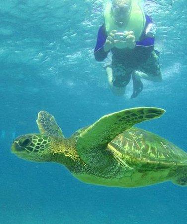 Malama Ke Kai - Reef Guides Hawaii