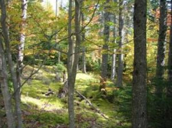 Hunter's Mountain Chalets: Walking Trails