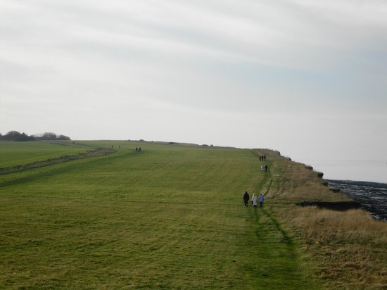 Reculver Country Park:                   Clifftop meadow