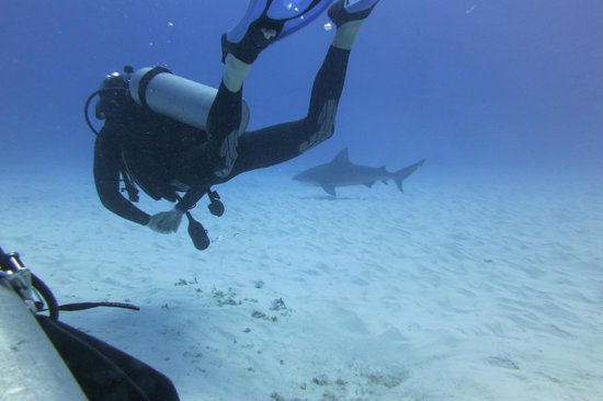 Scuba Libre:                   Shark point