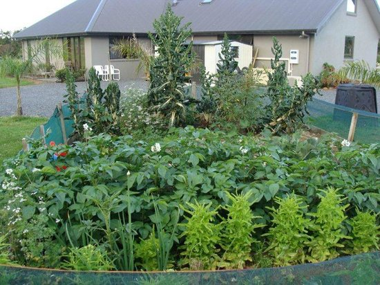 Ipipiri Lodge: Vegetable garden
