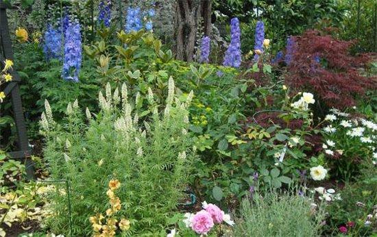 Eden Garden-bild