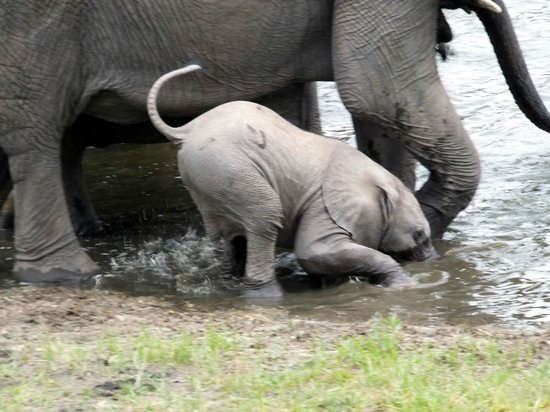 Arathusa Safari Lodge:                   baby elephant