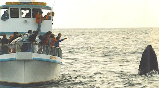 Indian Whale Watch- Day Boat Tours-billede