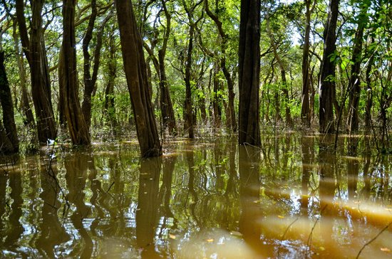 Kompong Phluk:                   Flooded forest