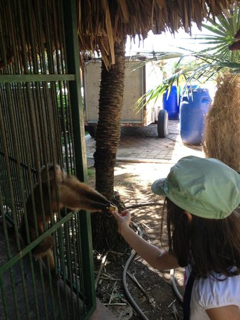 Noord, Aruba:                   Feeding the monkey