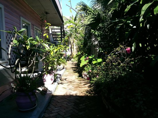 New Orleans Guest House:                   Courtyard garden