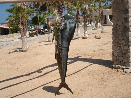 Punta Pescadero Paradise Hotel & Villas: Dorado